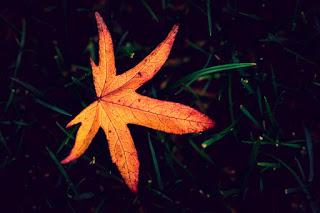 broken autumn leaves