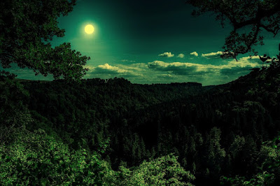 moon shining in the dark forest night
